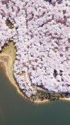 贵州省贵安新区樱花观光园一景