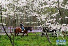 上海举行都市森林百花展