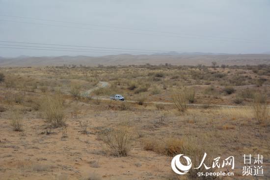 三月末,八步沙林场内已有丝丝绿意,一辆汽车从沙漠公路中穿行而过。(王文嘉 摄)