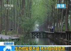 安徽合肥:生态修复草木盛 林水相间绿