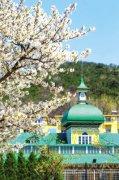 第十一届中国大连(旅顺)国际樱花节