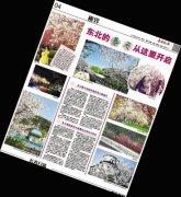 旅顺樱花开上 14家媒体头条