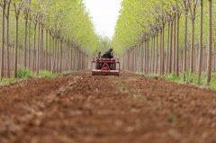 河北内丘:药材种植富农家